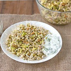 Mung Bean Sprout Salad recipe