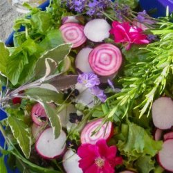 Elizabethan English Herb and Flower Salad With Honey Dressing recipe
