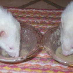 Pet Ferret's Soup recipe