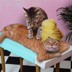 Edible Massage Oil recipe