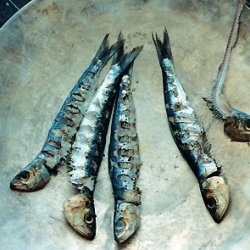Grilled Fresh Sardines with Fennel and Preserved Lemon recipe