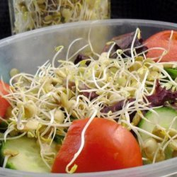 How to Sprout Lentils recipe