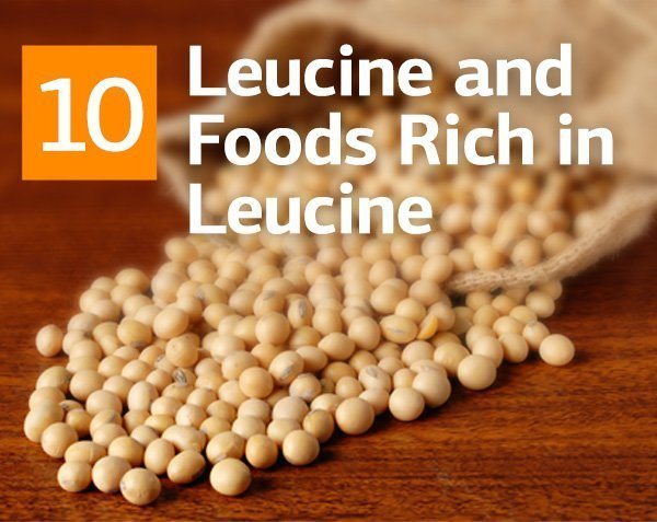 Leucine and Foods Rich in Leucine