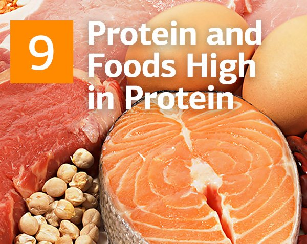 What is Protein and The Top 10 Protein High Foods You Should Eat According To Nutritionists