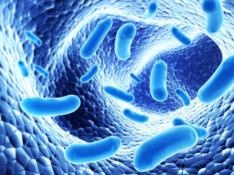What are Probiotics, their  Benefits, Probiotic Supplements and Foods
