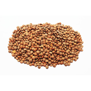 Lentils Protein info
