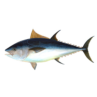 Tuna Fish Vitamin A info