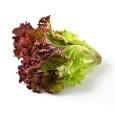 red leaf lettuce