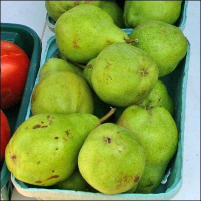 pears, canned, light syrup, drained usda Nutrition info