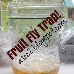 Simple Fruit Fly Trap