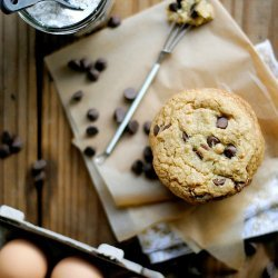 Chocolate Chip Cookie Turtle