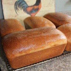 Whole Wheat Bread Recipe for Bosch