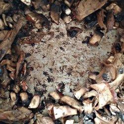 Thyme and Mushroom Gravy