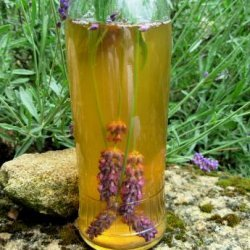 Easy Homemade Lavender Scented and Infused Vinegar recipe