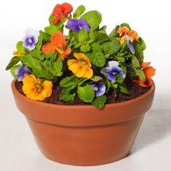 Flowerpot Cake (Food Network Kitchens)
