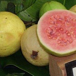 Guava Duff
