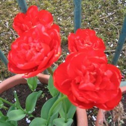 The Gardeners Hymn