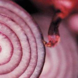 Carmelized Red Onion Sandwich