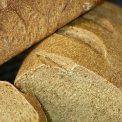 Basic Whole Wheat Bread