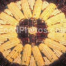 Leebears Corn Fritters recipe