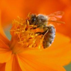 A Honey Of An Orange Bbq Sauce